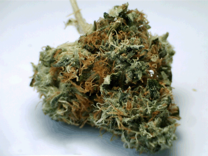 Pineapple Snow Cap Marijuana Strains Cannacentral