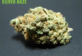 Silver Haze